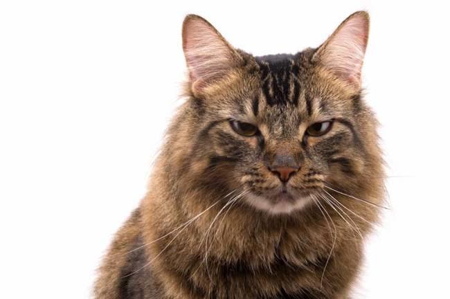 Cat Portrait Series