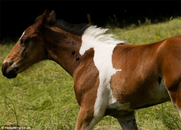 horsemark1