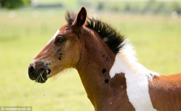 horsemark2