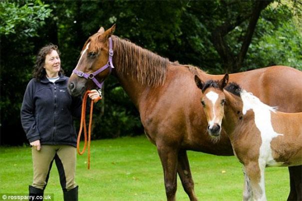 horsemark3