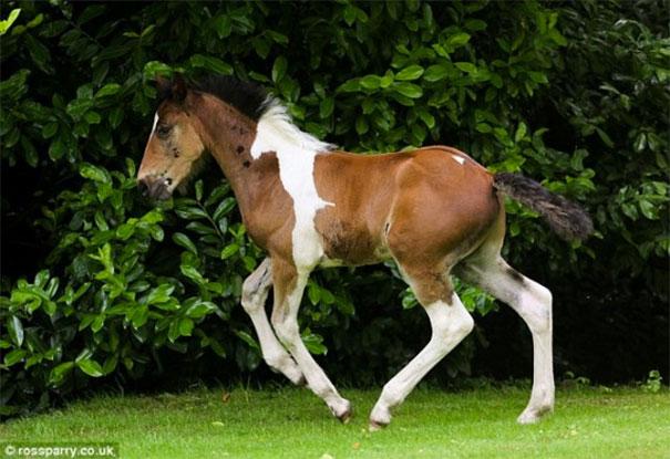 horsemark4