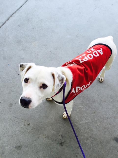 Candy-Adopt-Dog