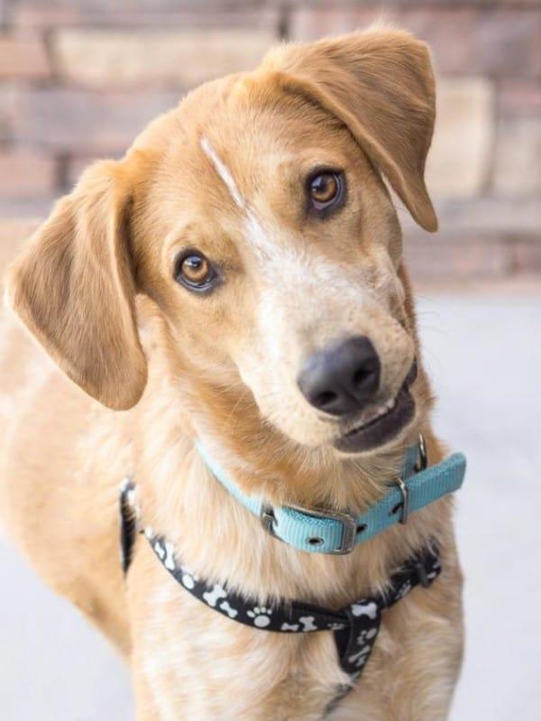 Hiro-dog-adoption-600x799