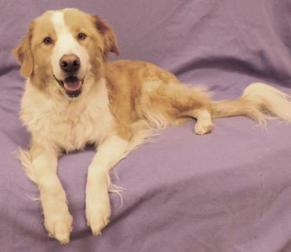 Minnie-Dog-Adopt-600x519