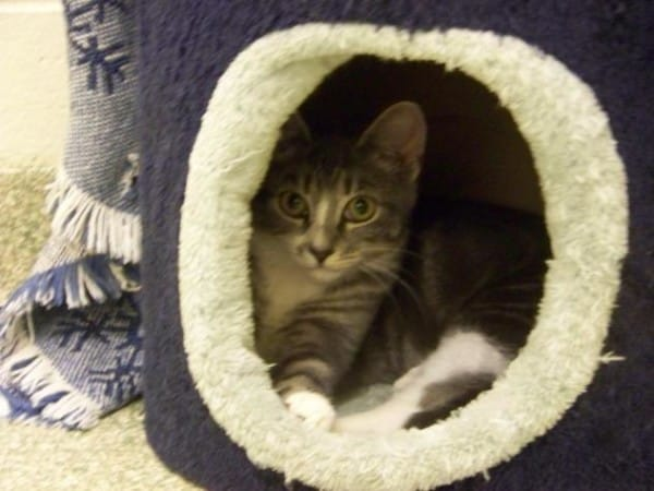 Molly-Cat-Adoption-600x450