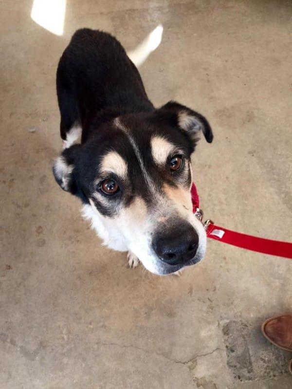 Oreo-Dog-Adopt-600x799