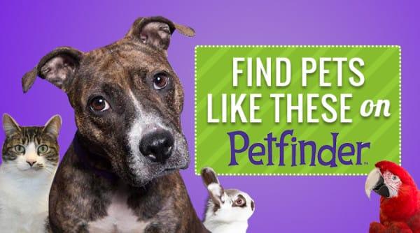 Petfinder-Logo-1-600x334