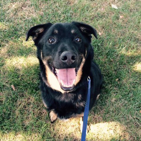 Sammy-Dog-Adopt-Me