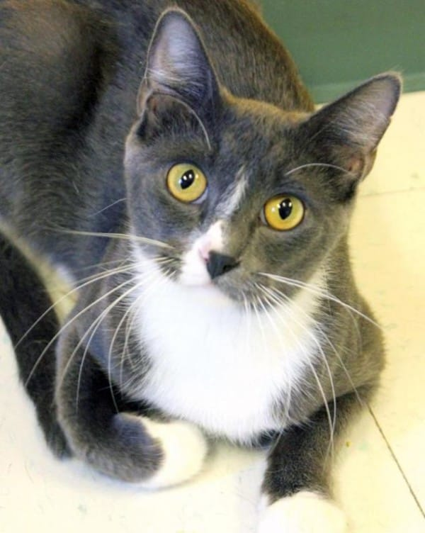 Stormy-cat-adoption-600x752