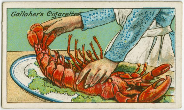 How-To-Judge-the-Freshness-of-a-Lobster1