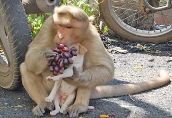 monkey-6-600x412