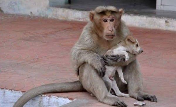 monkeyt-4-600x365